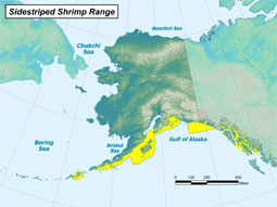 Sidestriped Shrimp range map