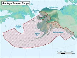 Sockeye Salmon range map