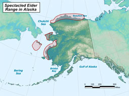 Spectacled Eider range map