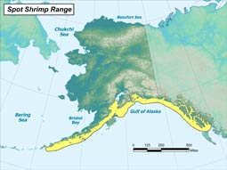 Spot Shrimp range map