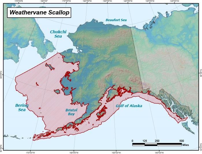 Range map of Weathervane Scallop in Alaska