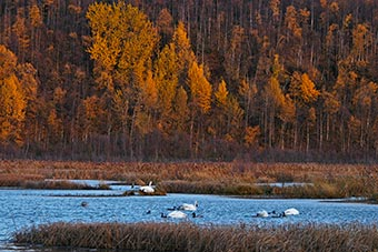 Potter Marsh in Southcentral Alaska