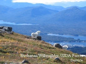 photo of Ketchikan area wildlife